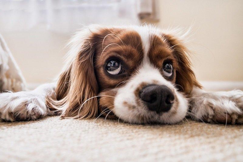 Okulistyka weterynaryjna, czyli kiedy warto zabrać naszego psa lub kota do kliniki