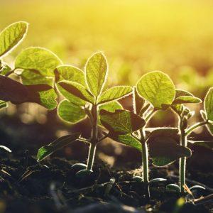 Jak wybierać środki ochrony roślin?